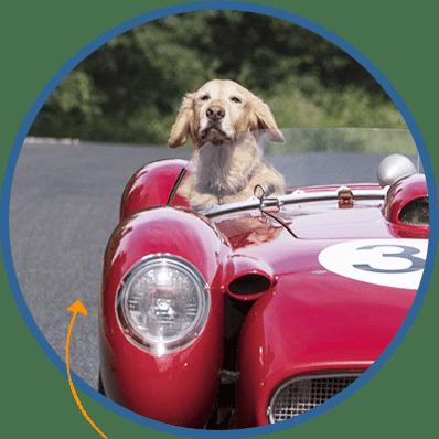 dog_check
